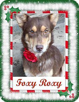 Australian Kelpie Mix Dog for adoption in Memphis, Tennessee - Foxy Roxy ~ Funny Girl!