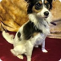 Adopt A Pet :: Nellie - Winters, CA