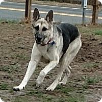 Adopt A Pet :: Becky - Mocksville, NC