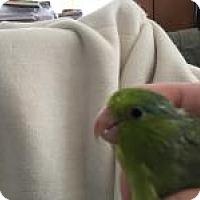 Adopt A Pet :: Gem - Neenah, WI