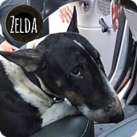 Adopt A Pet :: Zelda - Lake Worth, FL