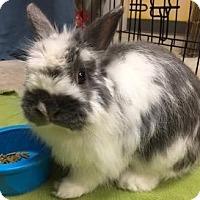 Adopt A Pet :: Benley - Woburn, MA