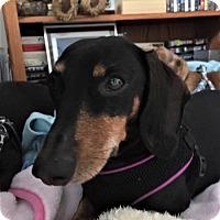 Adopt A Pet :: Madge in TN - Columbia, TN