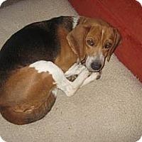 Adopt A Pet :: Trini - Phoenix, AZ