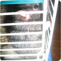 Adopt A Pet :: Bethie - Cincinnati, OH