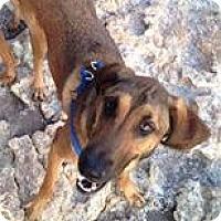 Adopt A Pet :: Satori (Courtesy Listing) - Scottsdale, AZ