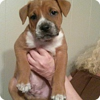 Adopt A Pet :: Loki - Fort Valley, GA