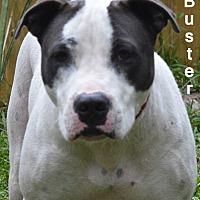 Adopt A Pet :: Buster - Lake Pansoffkee, FL