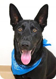 German Shepherd Dog Mix Dog for adoption in Dublin, California - Jethro
