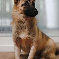 Adopt A Pet :: B0SS- Korea - Lucknow, ON