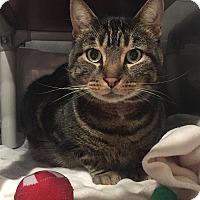 Adopt A Pet :: Dominic - Lafayette, NJ