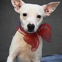 Adopt A Pet :: Milo - Ozone Park, NY
