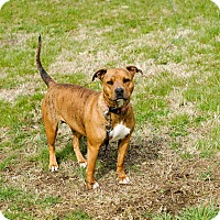 Adopt A Pet :: Nova **URGENT** - Columbia, TN
