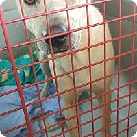 Adopt A Pet :: Fiona - Mira Loma, CA