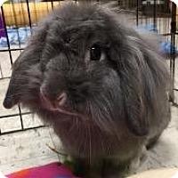 Adopt A Pet :: Mona - Woburn, MA