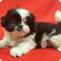 Adopt A Pet :: Alexa - Modesto, CA