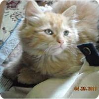 Adopt A Pet :: Cole & Corey - Riverside, RI