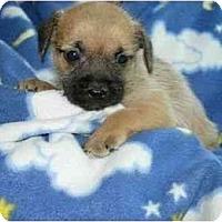 Adopt A Pet :: Sugar Bear - Kingwood, TX