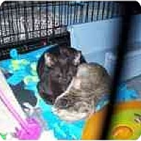Adopt A Pet :: To Amy, Love Sid - Grand Rapids, MI