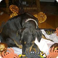 Adopt A Pet :: Renfield - Allegan, MI