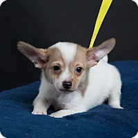 Adopt A Pet :: Cooper - Nuevo, CA