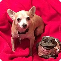 Adopt A Pet :: Sally - Upper Sandusky, OH