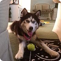 Adopt A Pet :: Princess - Brick, NJ