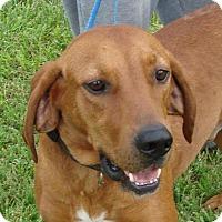 Adopt A Pet :: Bucky - Erwin, TN