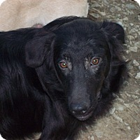 Adopt A Pet :: Morris - Harrisburgh, PA