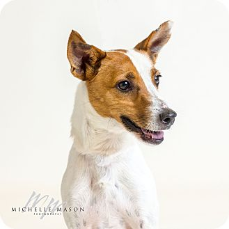 Terrier (Unknown Type, Small) Mix Dog for adoption in Naperville, Illinois - Milo