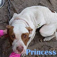 Adopt A Pet :: Princess - Orangeburg, SC