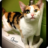 Adopt A Pet :: Clover - Hartford City, IN