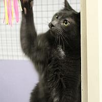 Adopt A Pet :: OG - Mission, BC