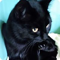 Adopt A Pet :: Hagar - Franklin, NH