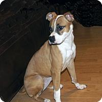 Adopt A Pet :: Leigh - Marion, NC