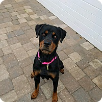 Adopt A Pet :: Chanel - New Smyrna Beach, FL