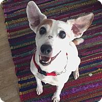 Adopt A Pet :: Bitsy - San Francisco, CA