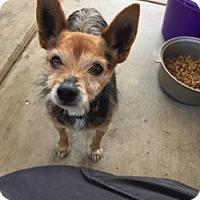 Adopt A Pet :: CHESTER - Gustine, CA