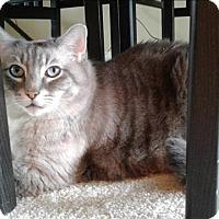 Adopt A Pet :: Marley - Sherwood, OR