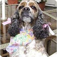 Adopt A Pet :: Mitzi - Sugarland, TX