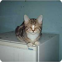 Adopt A Pet :: Baby - Hampton, CT
