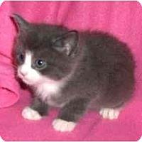 Adopt A Pet :: Lukey - Richmond, VA