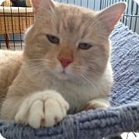 Adopt A Pet :: Homer - Hamilton, ON