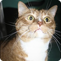 Adopt A Pet :: Tigger - Rockaway, NJ