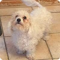 Adopt A Pet :: Moana - Homer Glen, IL