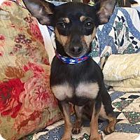 Adopt A Pet :: Theo - Santa Ana, CA