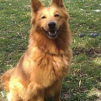 Adopt A Pet :: Francesca - Grayslake, IL