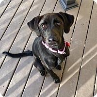 Adopt A Pet :: Penny - Potomac, MD
