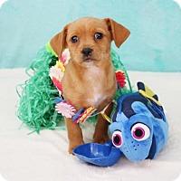 Adopt A Pet :: Fred - Yucaipa, CA