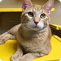 Adopt A Pet :: Scitz - Maryville, MO